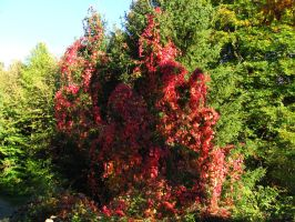 Autumn Tree 2 by Rylius