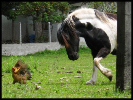 Chicken vs Horse by WEDieyounGE