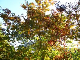 Autumn Tree by Rylius