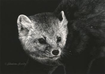 Mischievous - Scratchboard by ShaleseSands