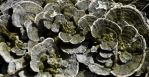 0036 - Fungi Bouqet 1 by Asralores-photos