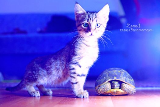 Kitten and Turtle by ZZeuSS