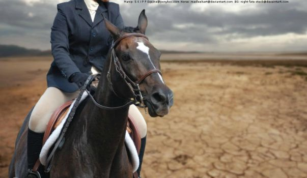 Desert Storm (Horse Picture) by MollyMay335