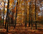 .autumnal forest. by Foozma73