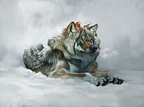 Fluffy winter wolf with video! by ailah