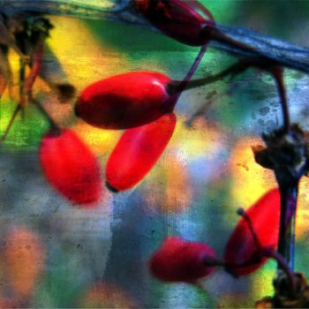 RedBerries by horstdesign