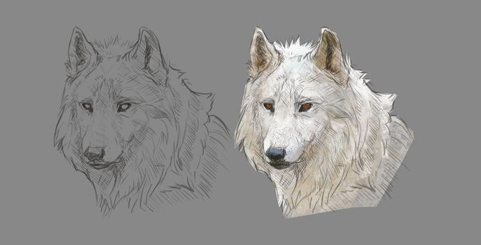 Wolf face and basic colouring by Roiuky
