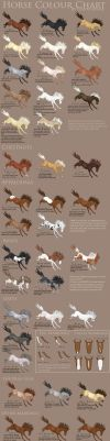 Horse Colour Chart vs 2 by Gaurdianax