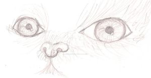 Realism Cat: First try by animeroxygirl