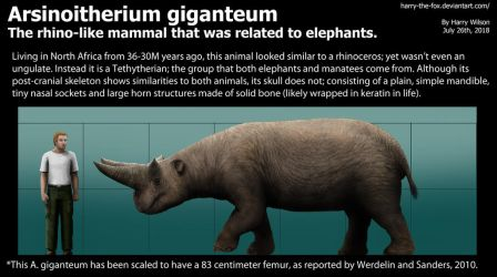 Arsinoitherium Size by Harry-the-Fox