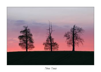 Three Trees by GBY