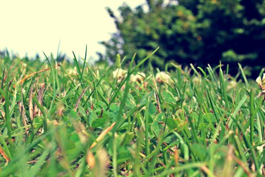 Grass_02 by loveblack
