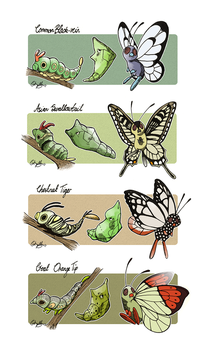Butterfree Family Variants by athelo