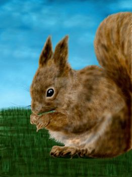 Squirrel painting- STOCK IMAGE by nishagandhi