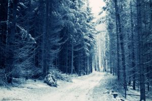 Winter is coming II by Janine-Autumn