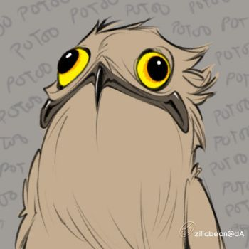 Potoo by zillabean