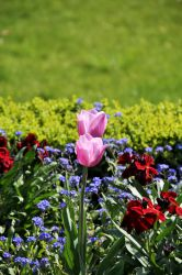 Tulips by curlyq139
