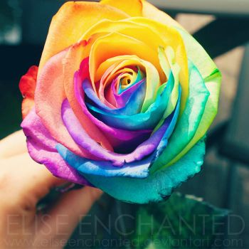 Holding the rainbow by EliseEnchanted