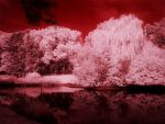 Infrared Park 4 by Argolith