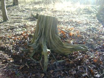 tree stump stock 2 by dark-dragon-stock