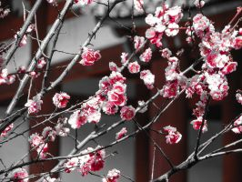plum blossoms by FubukiNoKo