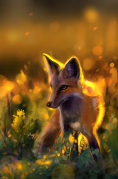 At the sunset | practice by Martith