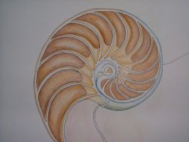 nautilus by owieprone