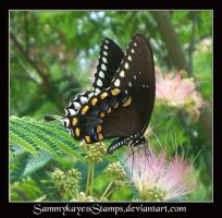 Butterfly 4 by Sammykaye1sStamps