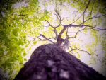 Uptree2 by EclecticReplicant