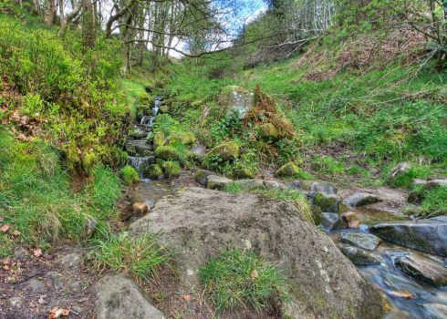 FREE STOCK!! Small Stream by mzkate
