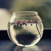 02. Flower Bowl by catchingfyre