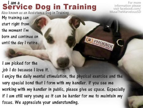 Service Dog in Training Educational Poster by bunnybasement