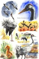 Crane Studies by rieke-b