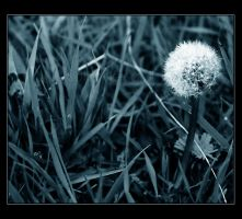 Isolated by pinica