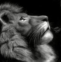 lion by subhy