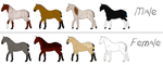 OPEN Draft Horse Adoptables 20 Points by lionsilverwolf