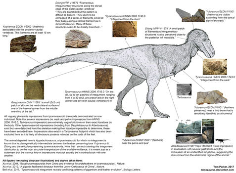 Tyrannosauroid integument composite by Tomozaurus