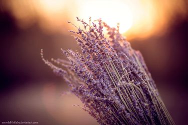 Lavender by Snowfall-lullaby