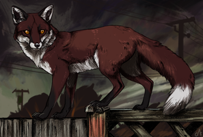 The Backyard Fox by CorruptedFox