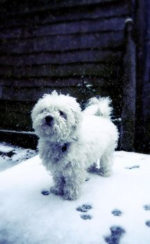 Alfie in the snow. by DeadElectric-x
