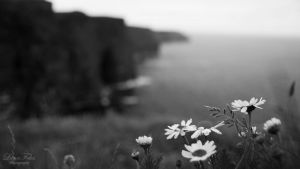 Cliffs of Moher 2 by LunaFeles