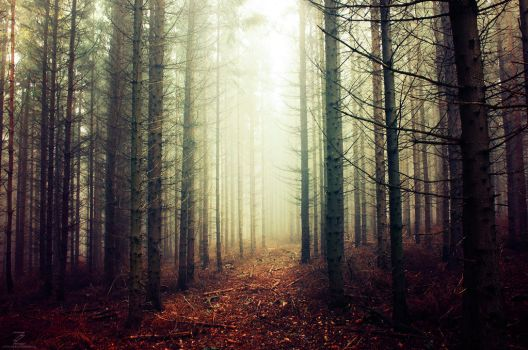 If These Trees Could Talk XXIV. by realityDream