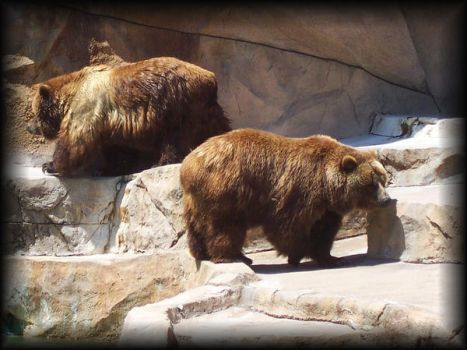 Grizzly Bear 3 by eetap