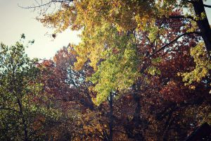 when autumn blushes at you by fotomademoiselle