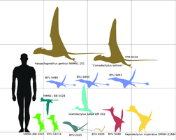 Morrison formation pterosaurs by paleosir
