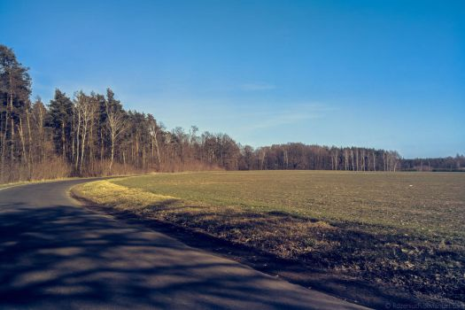 Road to the forest by Rdzeniuch