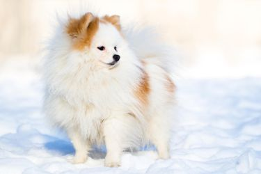 White and Fluffy II by Avestra