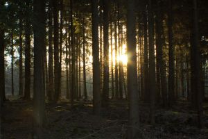Forest at sunset 2 by mprangenberg