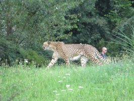 Prague ZOO Don't Cheat on me, Your Cheetah by NemuArt