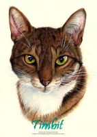 Pet Portrait - Timbit by 8TwilightAngel8
